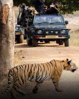 Madhya Pradesh - Kanha Jungle Book Holiday